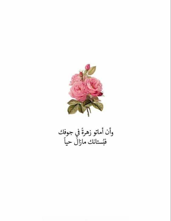 خلفيات رمزيات حب بنات فيسبوك حكم شعر أقوال وإن أماتو زهرة في جوفك فبستانك ما زال حيا Arabic Quotes Proverbs Quotes Quran Quotes Love