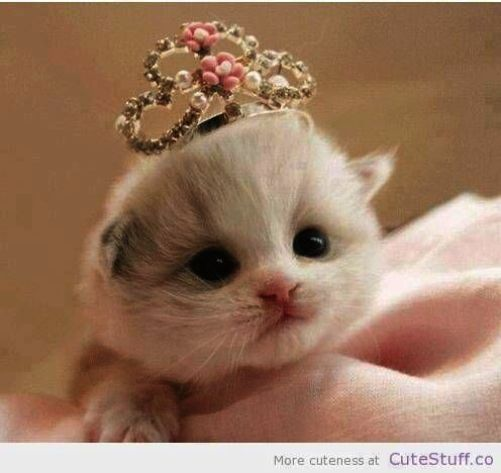 Cute Cats Naughty Cute Kittens For Sale Cheap Kittens Cutest