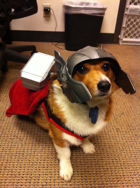 Twitter / dogpic84: 完全防備の勇者 ... #dog #thor