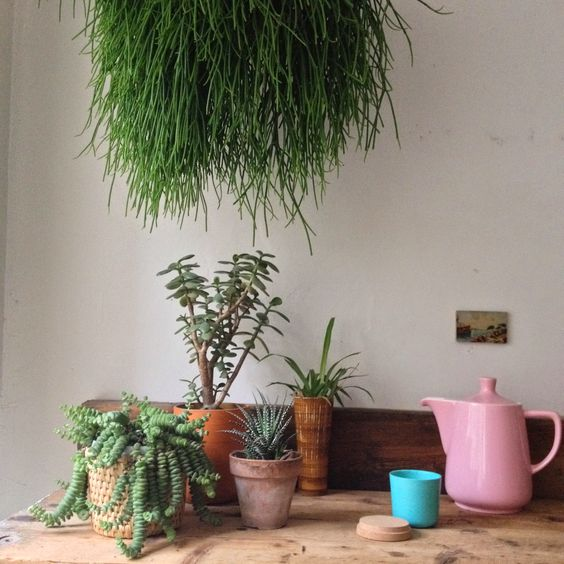 Urban Jungle Bloggers: Plants on the Workplace by Rekobo