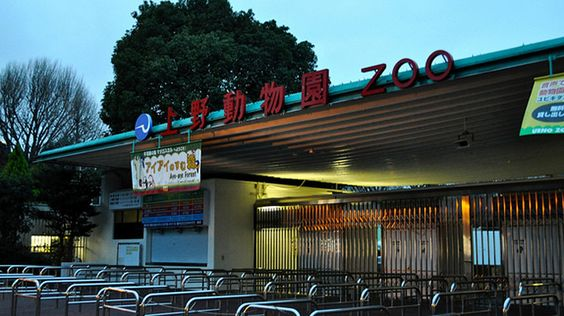 Le zoo d'Ueno, Tokyo