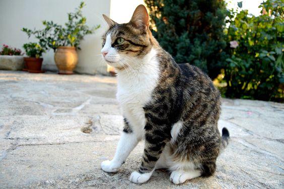 J.Fox #cat #kitty