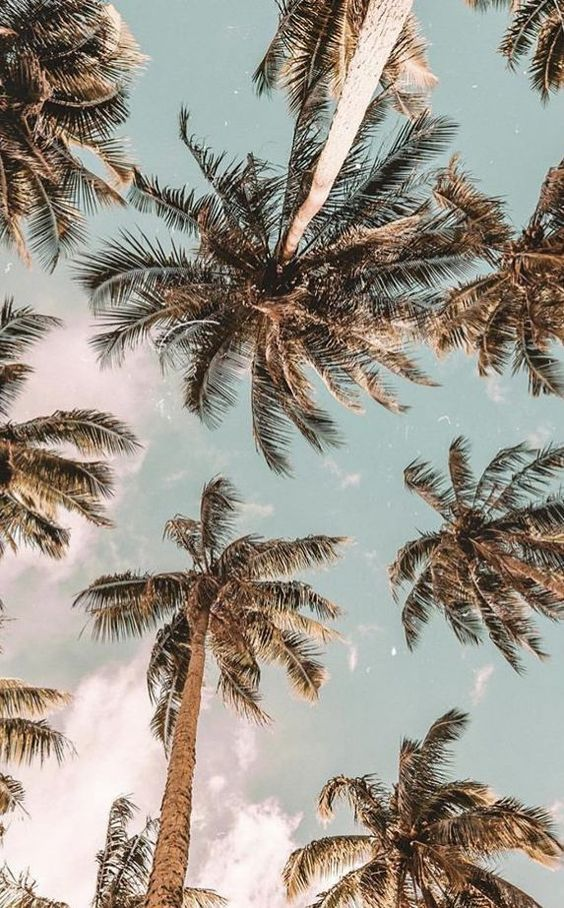Beach Vibes In 2020 Aesthetic Backgrounds Aesthetic Wallpapers Nature Photography