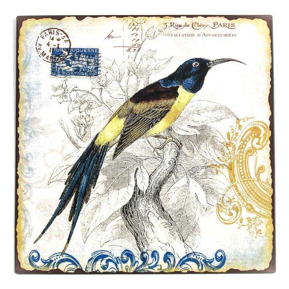 Pássaro Selo Azul