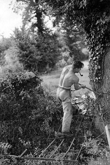 "Felling Trees at Rag, Galhampton, Somerset, c. 1940 ""helllllloooo!"""