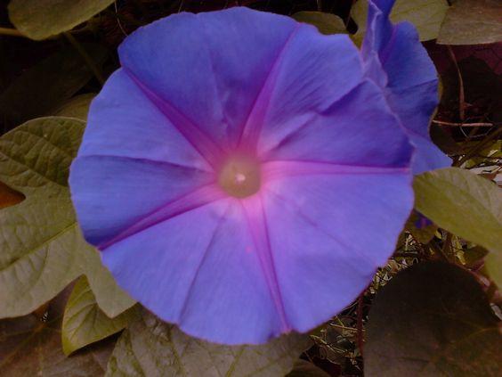esta flor é do meu quintal