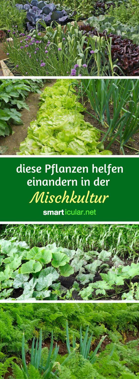 Best Hochbeet Bepflanzen Ideas On Pinterest Krauter Anpflanzen Gemusegarten And Bauerngarten Anlegen