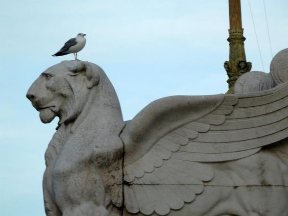 Seagull on statue, Victor Emmanuel Monument, Capitoline Hill (Rome)