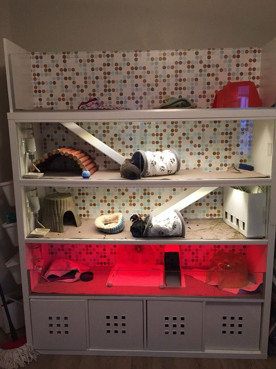 """IKEA Kallax expedit DIY cage for my guinea pigs and hedgehog. It is 17.1 sqft total for three levels; which is larger than the suggested minimum size for 4 cavies. Mine can run full tilt and love to do laps up and down the levels; this dispels the idea that each level is too """"small"""" because they can't run. It's still bigger than a 2x6 C&C cage and all the same natural behaviors are exhibited."""
