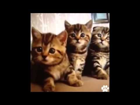 Best Pet Vines of 2013 - Amazing Collection of This Years Dog, Cat and A...