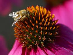Image result for macro photography of bees