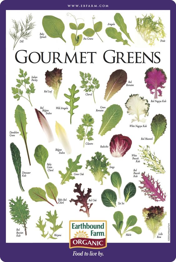 Gourmet Greens identification chart | Seasonal Delights ...