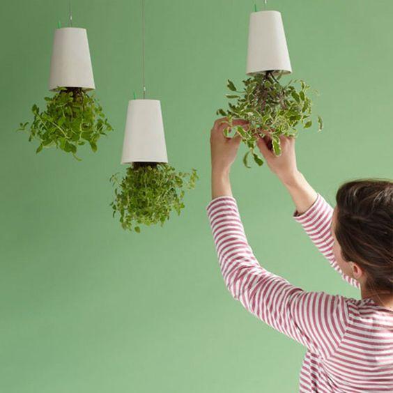 10 consejos para cultivar plantas aromáticas