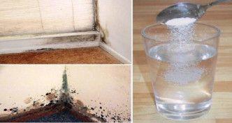 Basta pulverizar isto na parede para se livrar do mofo