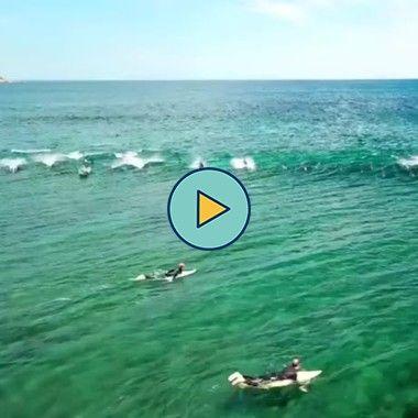 surfando com golfinhos
