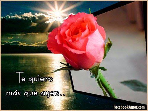 Frases Lindas Para Facebook: Imagenes De Rosa Rojas Con Frase De Amor
