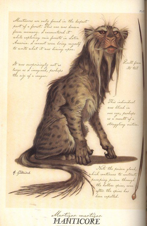 From the Spiderwick Field Guide (I like this picture because it's a more realistic version of a Manticore):