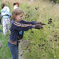 Wild Flower education resources from the US Forest Service