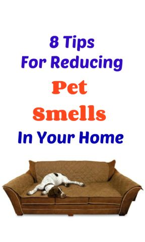 Is your smelly pet stinking up your house? Are you looking to keep a pet without the lingering smells? Keep reading to find out what you can do to prevent and minimize pet odors from your dog or cat.