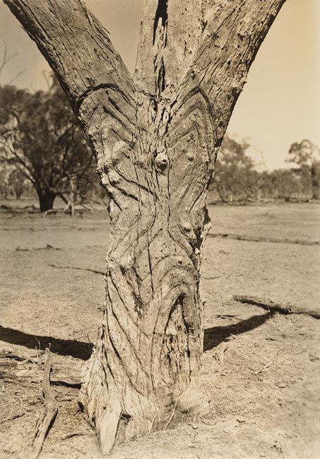 Carved trees gamilaroi country album bora ground at