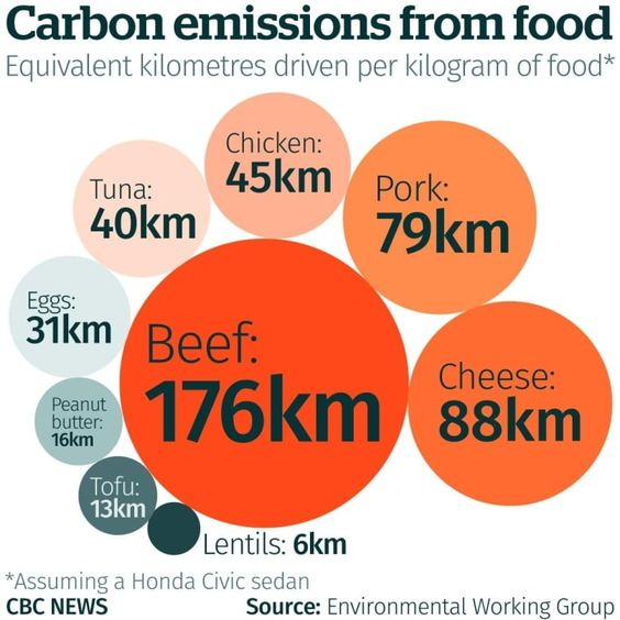 Your meals are speeding up climate change, but there's a way to eat sustainably | CBC News