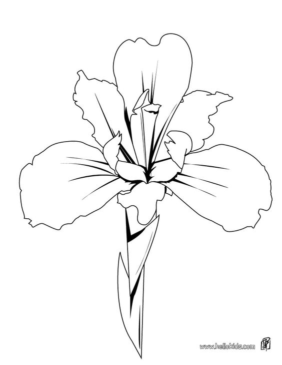 Iris Drawing FLOWER Coloring Pages 43 Free Online Books