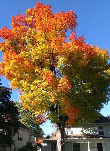 Leaves on Rawles Street | by Larry the Biker