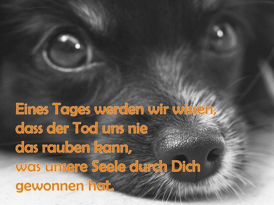 Startseite Eines Tages Werden Wir Wissen Trauergedichte Anubis Tierbestattung Regenbogenbrucken Hund Hund Zitat Trauerspruch Hund