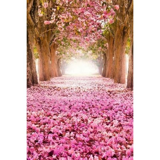 Pinterest ❤ liked on Polyvore featuring backgrounds and flowers