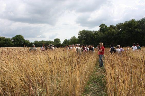 """""""Elles sont en train de s'emparer de toutes les plantes qui existent sur la planète""""... http://www.reporterre.net/Face-aux-multinationales-qui-veulent-s-emparer-de-la-semence-les-paysans"""