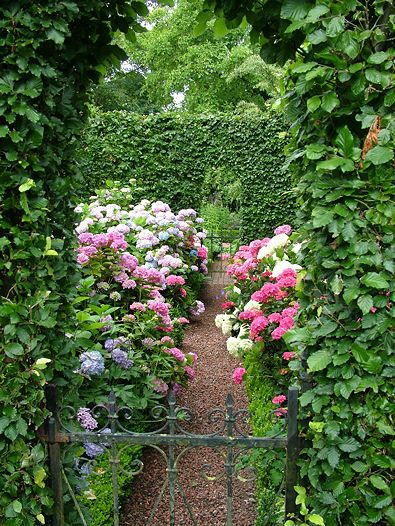 Der Garten Garten Pflanzen Garten Ideen
