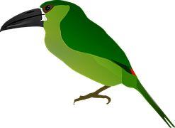 Dierlijke, Vogel, Tekening, Natuur