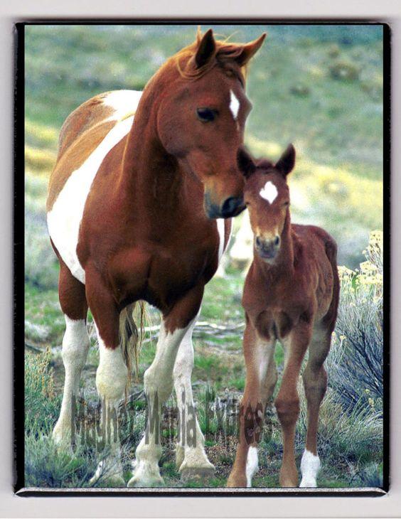 Metal Magnet Wild Horses Mare Foal Oregon Usa Travel Horse Magnet X