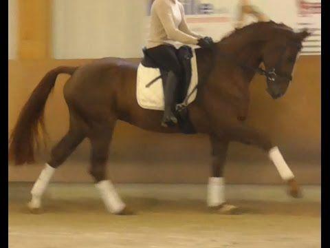 www.sporthorses-online.com 2010 Hanoverian Dressage gelding / Hannoveran...