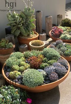 Shallow Bowl Container Pot Planter Low Growing Drought