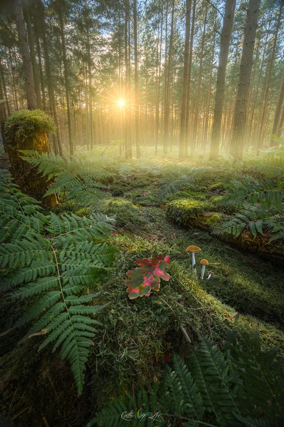 Enchanted Forest / 500px )
