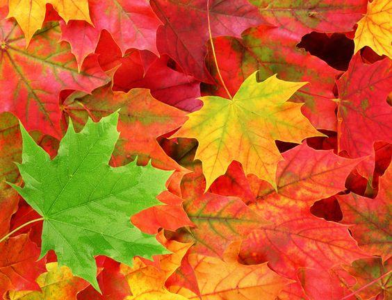 fall leaves<3