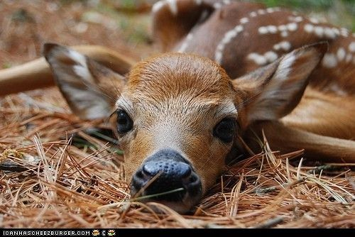 cute animals - Daily Squee