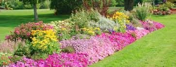 Resultado de imagem para plantas para jardim