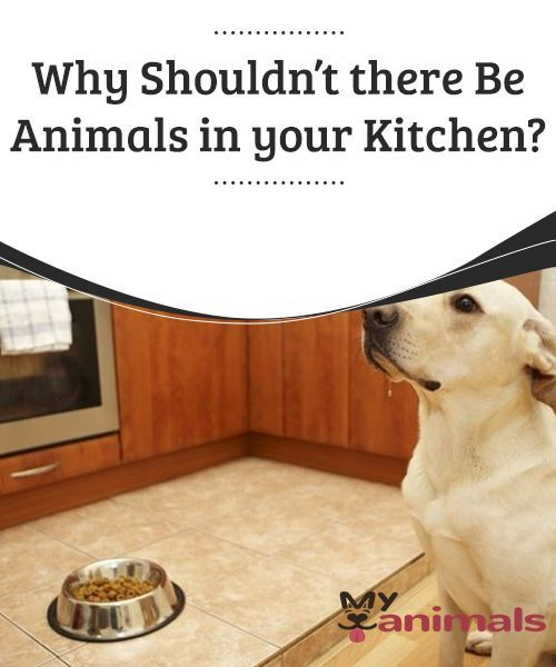 Why Shouldn T There Be Animals In Your Kitchen It S Very Unpleasant To Find A Dog Hair In Your Food But Beyond That The Main Reason W Dogs Dog Hair Animals