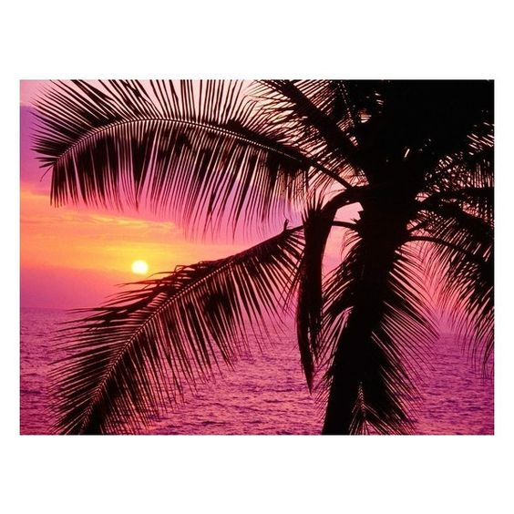 IF YOU LIKE PINA COLADAS ❤ liked on Polyvore featuring pictures, backgrounds, photos, pink e beach