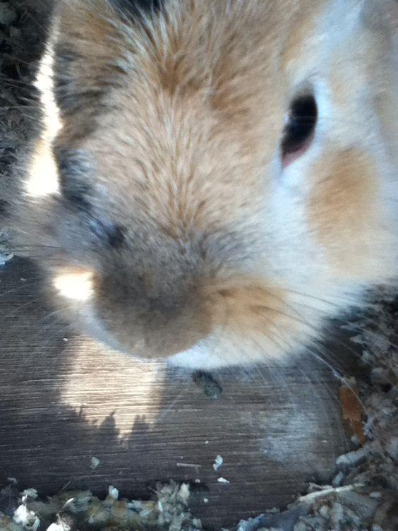 My own rabbit