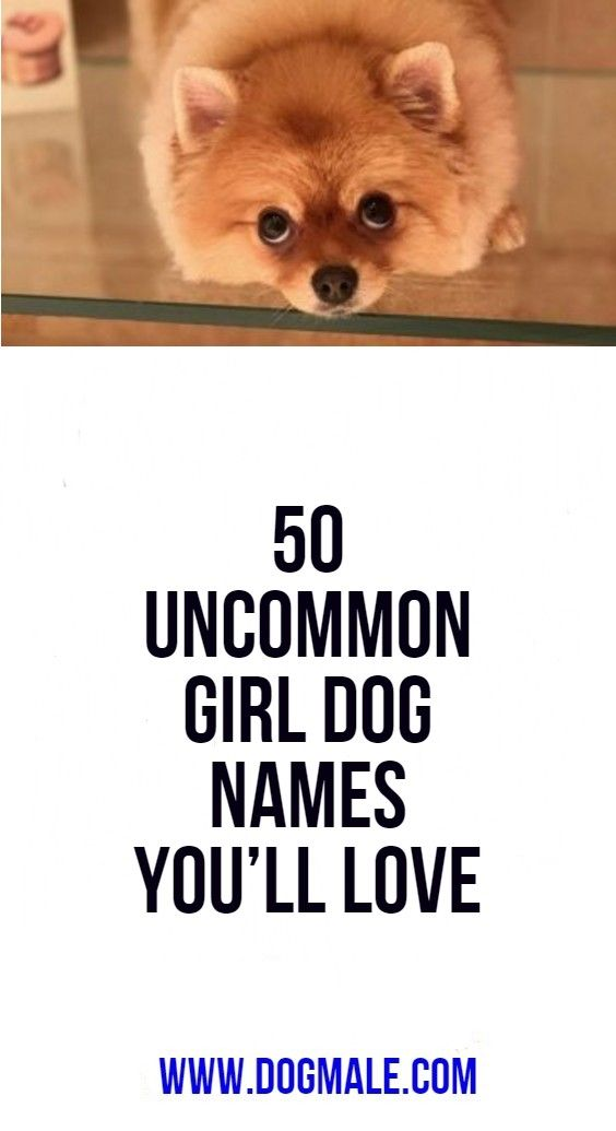 50 Uncommon Girl Dog Names You Ll Love In 2020 Girl Dog Names Dog Names Funny Dog Names