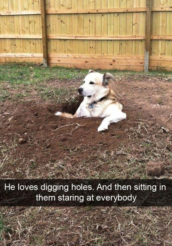 25 Pics Funny Dog Memes To Cheer You Up On A Bad Day Lovely Animals World Funny Dog Memes Dog Memes Puppies Funny