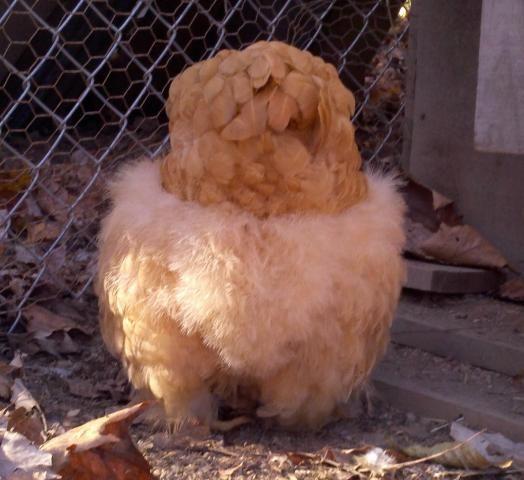 Guess what?  Chicken butt!  Teehee!