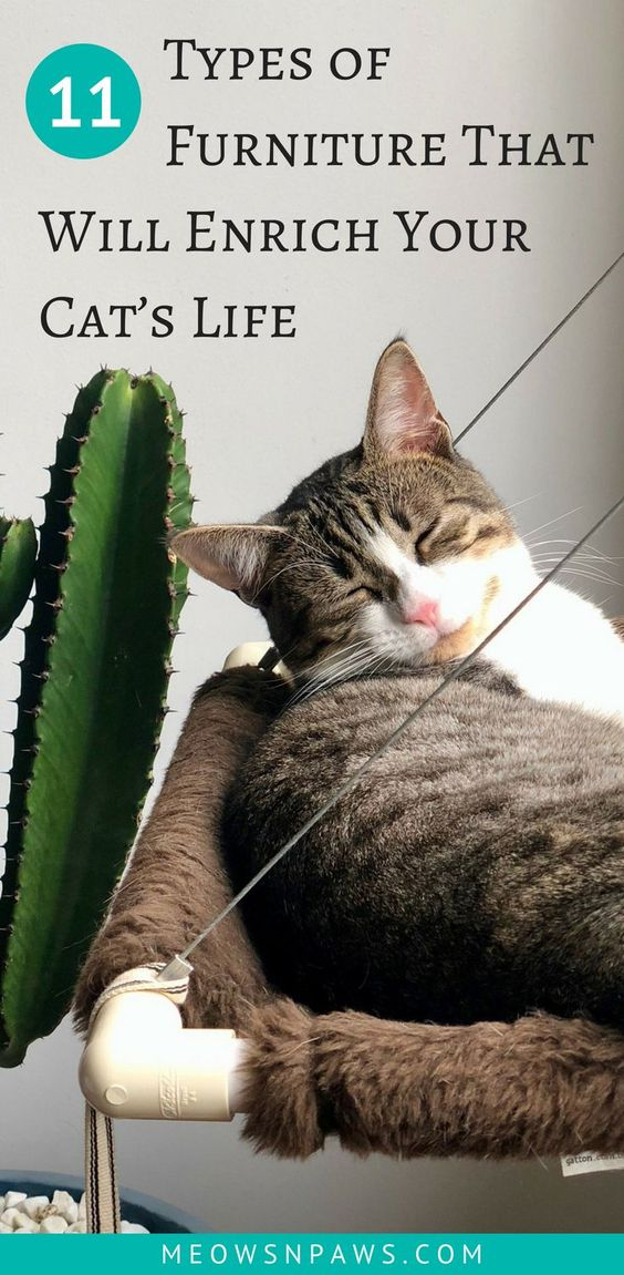 11 Types Of Furniture That Will Enrich Your Cat S Life Cat Care Cat Training Cat Life