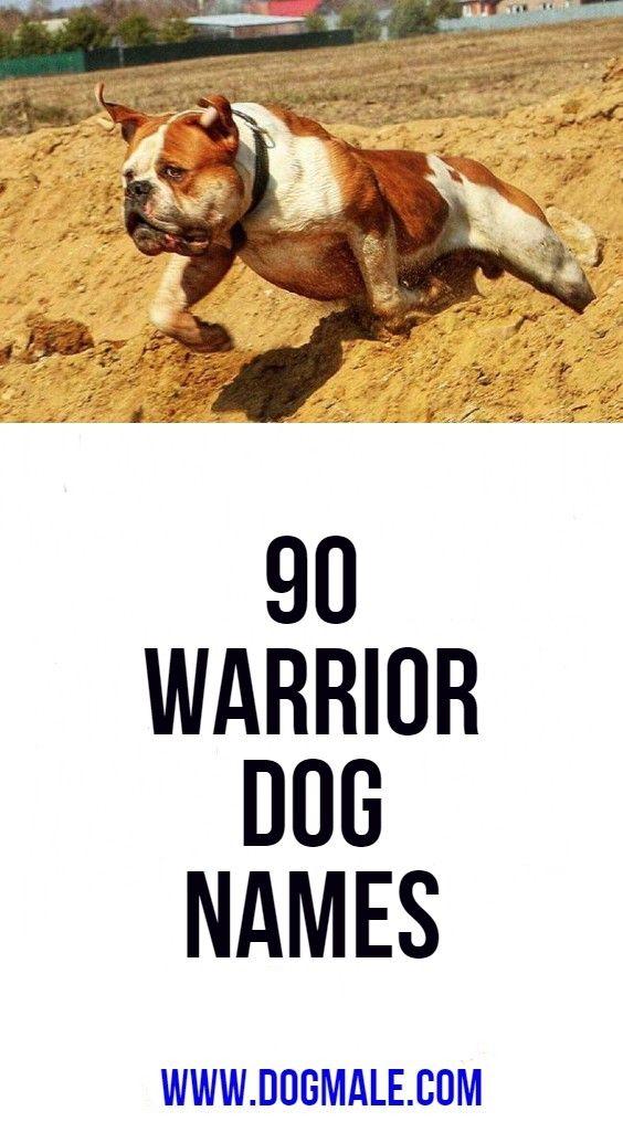 90 Warrior Dog Names Dog Names Popular Dog Names Female Warrior Names
