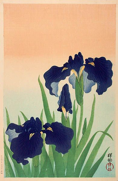 hanga gallery . . . torii gallery: Iris by Ohara Koson