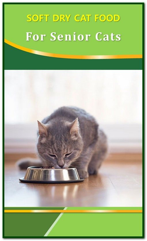 Soft Dry Cat Food For Seniors Dry Cat Food Cat Food Senior Cat Food