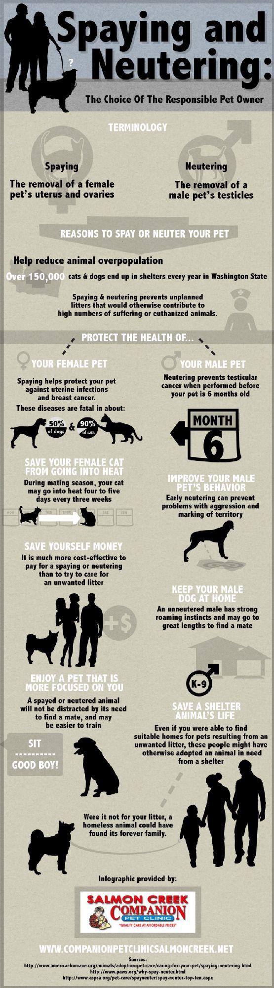 Spaying and Neutering: The Choice of the Responsible Pet Owner - Sterilizzazione e castrazione: la scelta del proprietario responsabile del proprio animale domestico